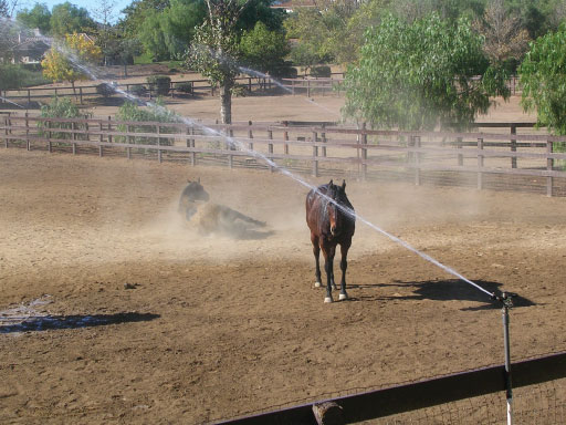 Horse in Sprinkler